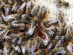 "The swarm and the  ""Queen Bee Effect"".... look at the ""Being"" at the Centre."