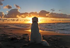 The sunset is best watched alone on the beach (Net image)